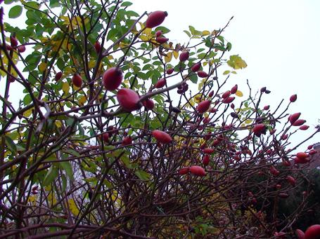 Novemberblüten
