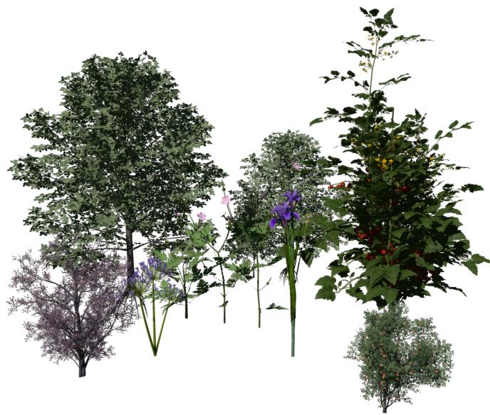 xfrog Pflanzen